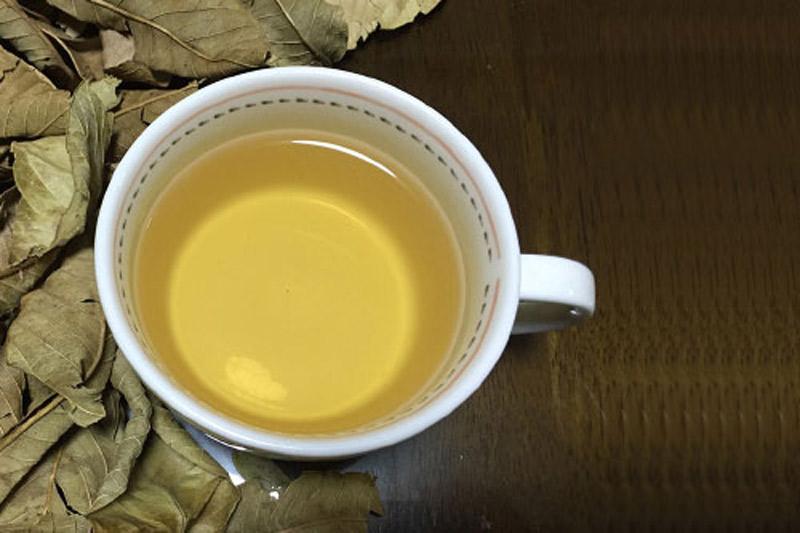 trà lá ổi trị bách bệnh