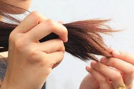 Tóc bị chẻ ngọn